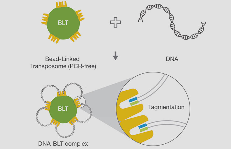 Illumina DNA PCR-Free chemistry