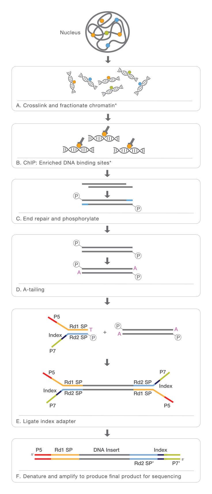 Chromatin Immunoprecipitation Sequencing (ChIP-Seq)